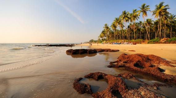 morjim-beach-goa