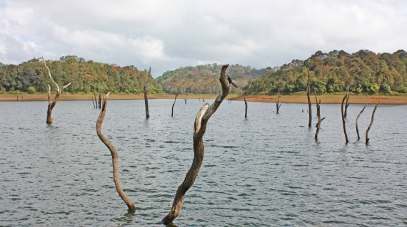 periyar-national-park-thekkady