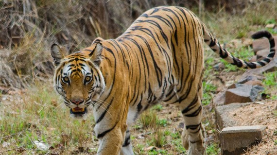 badhavgarh-national-park