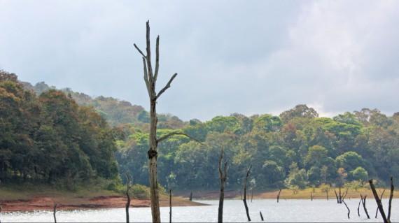 periyar-lake-thekkady