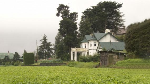 tea-gardens-nuwara-eliya