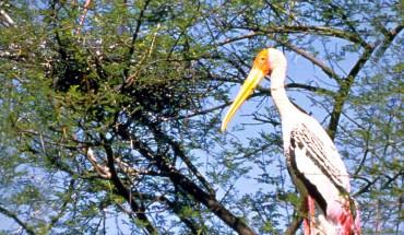 Rajasthan Bird Tour